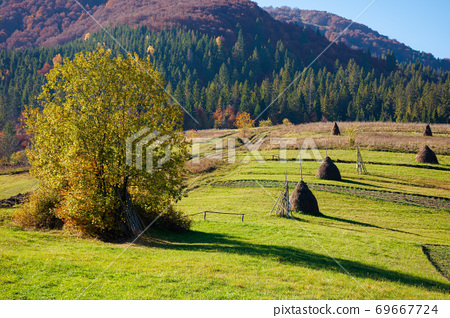 carpathian rural landscape in autumn. beautiful countryside scenery on a sunny day. haystacks on the green fields rolling through hills. trees in fall foliage 69667724