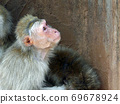 我认为我在隶属于福知山动物园的丸山市看到的一只猴子 69678924