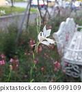 흰꽃 69699109