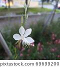 꽃한송이 69699200