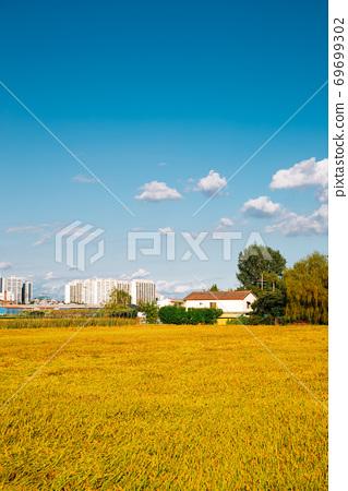 Autumn countryside farm field with modern apartment buildings in Pyeongtaek, Korea 69699302