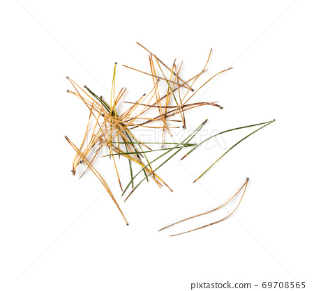 Heap of pine needles isolated on white background 69708565