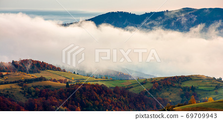 stunning rural landscape. foggy scenery at sunrise in autumn season. trees on mountain hills in colorful foliage 69709943
