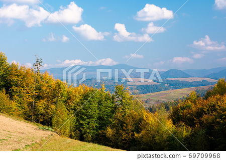 rural landscape of carpathian mountains in autumn. trees in yellow foliage. beautiful sunny weather 69709968