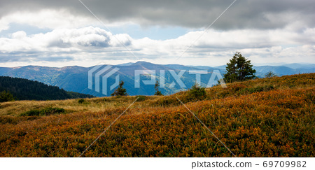 mountain landscape in autumn. dry colorful grass on the hills. ridge behind the distant valley. view from the top of a hill. clouds on the sky. synevir national park, ukraine 69709982