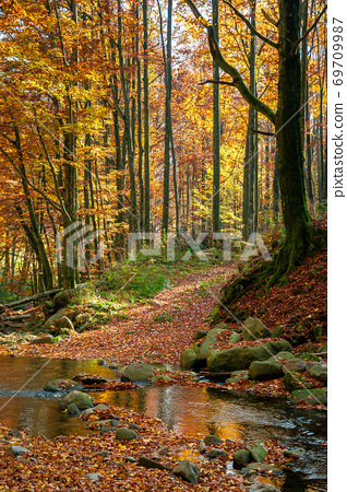 mountain river in autumn forest. rocks and fallen foliage on the shore. trees in yellow and red foliage. gorgeous nature autumnal scenery 69709987