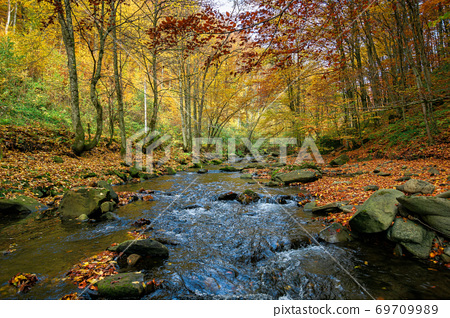 small forest stream. beautiful autumn nature scenery. trees in colorful foliage. rocks in the water 69709989
