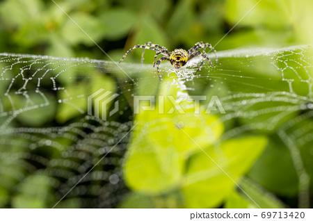 蜘蛛網 69713420