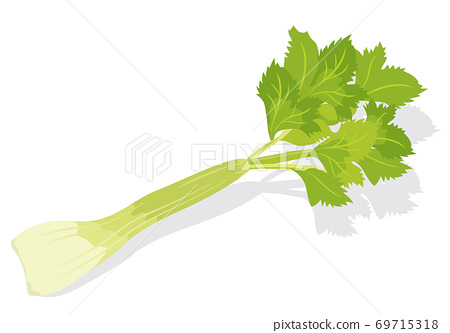 蔬菜芹菜 69715318