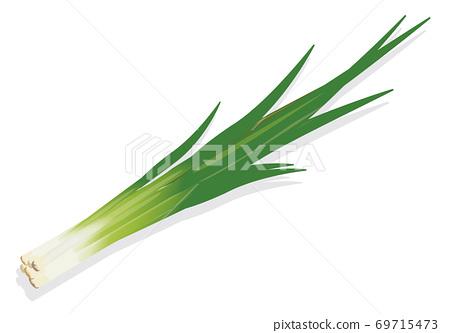 蔬菜_韭菜 69715473