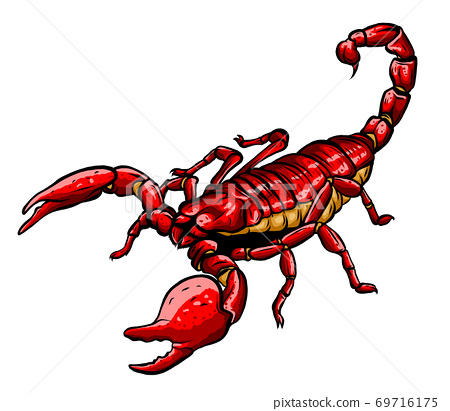 Mascot icon illustration of a scorpion, a predatory arachnid of the order Scorpiones 69716175