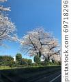 스미다 강 주변의 벚꽃 69718296
