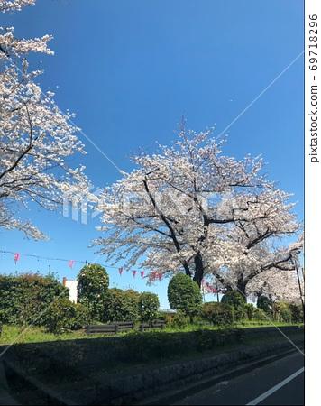 Cherry blossoms around the Sumida River 69718296