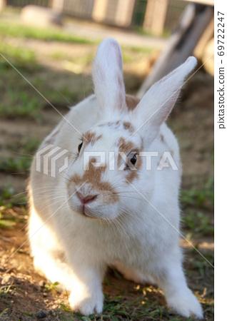 可愛的白色兔子在戶外近拍特寫 69722247