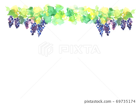Illustration of a vineyard drawn in watercolor 69735174