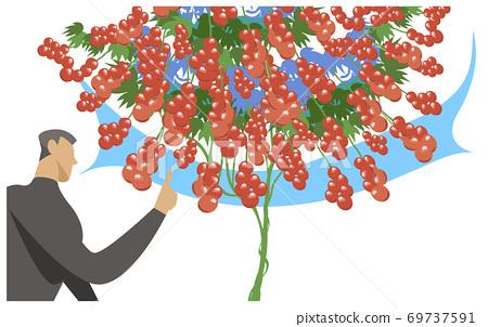 番茄的水培栽培 69737591