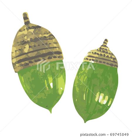 2綠色橡子水彩 69745849