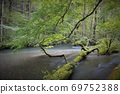 Oirase Gorge, a fallen tree lying on the mountain stream, the flow of Sanran 69752388