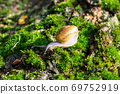 Snails climb the trees covered by moss. 69752919