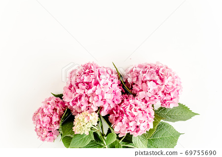 Beautiful, pink hydrangea flower on white background. Floral concept. Flat lay, top view.  69755690