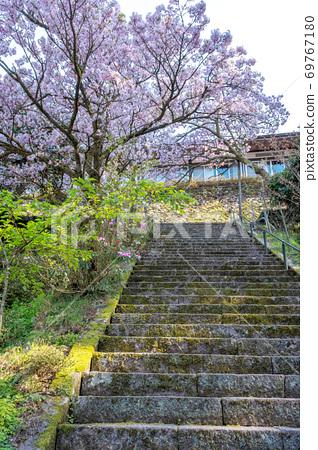 三德櫻(三德山) 69767180