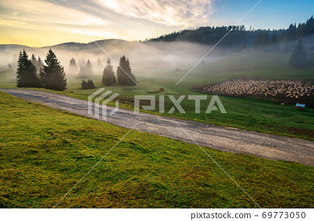 morning mist in apuseni natural park. valley full of fog at dawn. beautiful landscape of romania mountains in autumn. flock of sheep on the meadow. spruce trees on the hills. glowing clouds on the sky 69773050