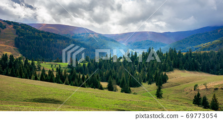 autumnal countryside landscape. beautiful mountain scenery on a cloudy day. green fields rolling through hills in to the forest at the foot of the ridge 69773054