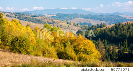 rural landscape of carpathian mountains in autumn. trees in yellow foliage. beautiful sunny weather 69773071