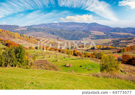 carpathian rural landscape in autumn. beautiful countryside scenery on a sunny day. haystacks on the green fields rolling through hills. trees in fall foliage. village in the valley 69773077