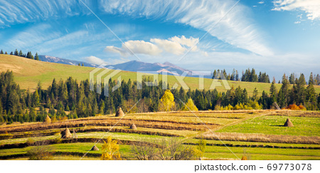 carpathian rural landscape in autumn. beautiful countryside scenery on a sunny day. haystacks on the green fields rolling through hills. trees in fall foliage 69773078