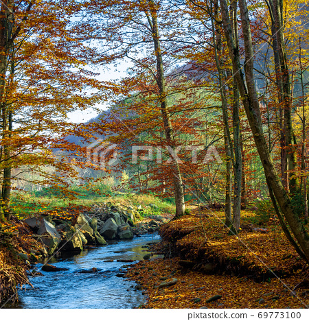 mountain water stream in the beech forest. beautiful nature scenery in autumn on a sunny day 69773100