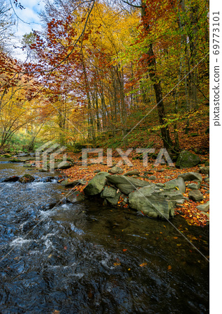 mountain river in beech forest. beautiful autumnal scenery of carpathian woodland. trees in fall colors. boulders in the stream. nature freshness concept 69773101