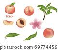 Peach illustration 69774459