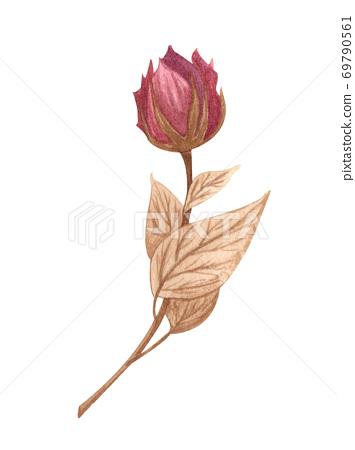 Watercolor rose flower isolated. Garden rose flower hand dawn illustration 69790561