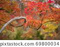 秋叶上色红色 69800034