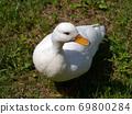 在福知山市动物园发现我发现的鸭子 69800284