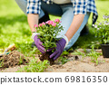 woman planting rose flowers at summer garden 69816350