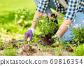 woman planting rose flowers at summer garden 69816354