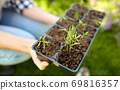 woman holding pots tray with seedlings at garden 69816357