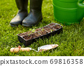 seedlings in starter pots tray with soil at garden 69816358