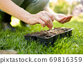woman planting flower seeds to pots tray with soil 69816359