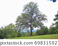 Beautiful nature landscape with trees on the green grass field on the hill 69831502
