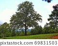 Beautiful nature landscape with trees on the green grass field on the hill 69831503