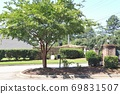 Beautiful flower trees and gardens blooming in the city 69831507