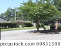Beautiful flower trees and gardens blooming in the city 69831509