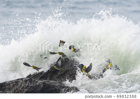 A flock of green pigeons swallowed by the waves 69832388