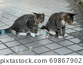 Kijitora kitten brothers of stray cats who flutter at the first soap bubbles 69867902