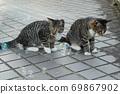 첫 비눗 방울에 허둥지둥하는 도둑 고양이 꿩 호랑이 고양이 형제 69867902