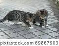 Kijitora kitten brothers of stray cats who flutter at the first soap bubbles 69867903