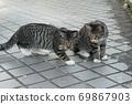 첫 비눗 방울에 허둥지둥하는 도둑 고양이 꿩 호랑이 고양이 형제 69867903